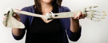 Imagen: Parte de la Serie Anatómica, impresa en 3-D, para ayudar a revolucionar la educación y la capacitación, médicas, en todo el mundo, especialmente donde el uso de cadáveres es problemático (Fotografía cortesía de la Universidad Monash).