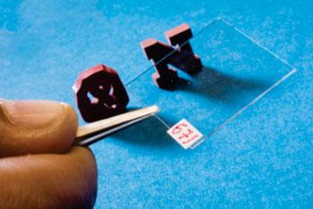 Imagen: El sensor de nanotecnología de película delgada para la detección precoz del cáncer de mama (Fotografía cortesía de Craig Chandler / Universidad de Nebraska, Lincoln).