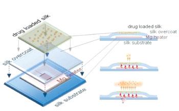 Imagen: Modelo esquemático del implante electrónico de seda y magnesio, mientras se disuelve (Fotografía cortesía de la Universidad de Tufts).