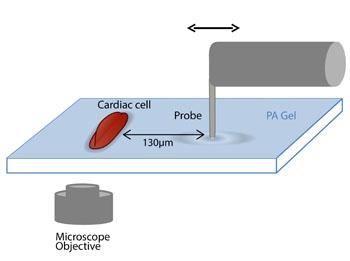 Imagen: Un diagrama de la configuración experimental (Fotografía cortesía del Instituto Tecnológico de Israel).